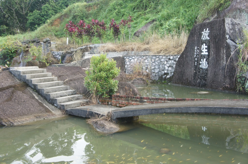 "fish pond where turtles and fishes are ""set free"""